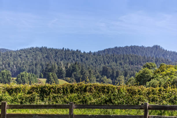 Beautiful rural landscape scene in Humboldt County, CA with redwood forest, blue sky, split rail fence. No people. Copy space. stock photo