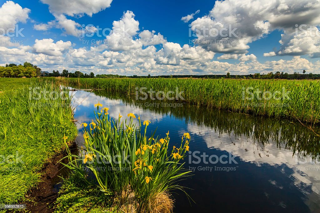 Beautiful rural landscape with river and flowers royalty-free stock photo