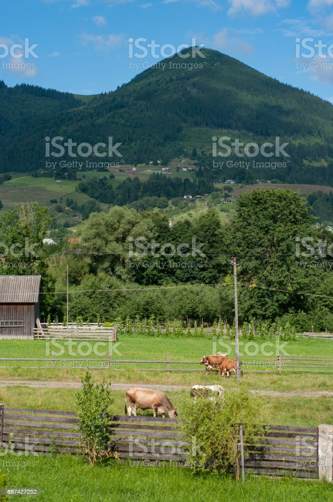 Beautiful rural mountain landscape with cows and fence stock photo