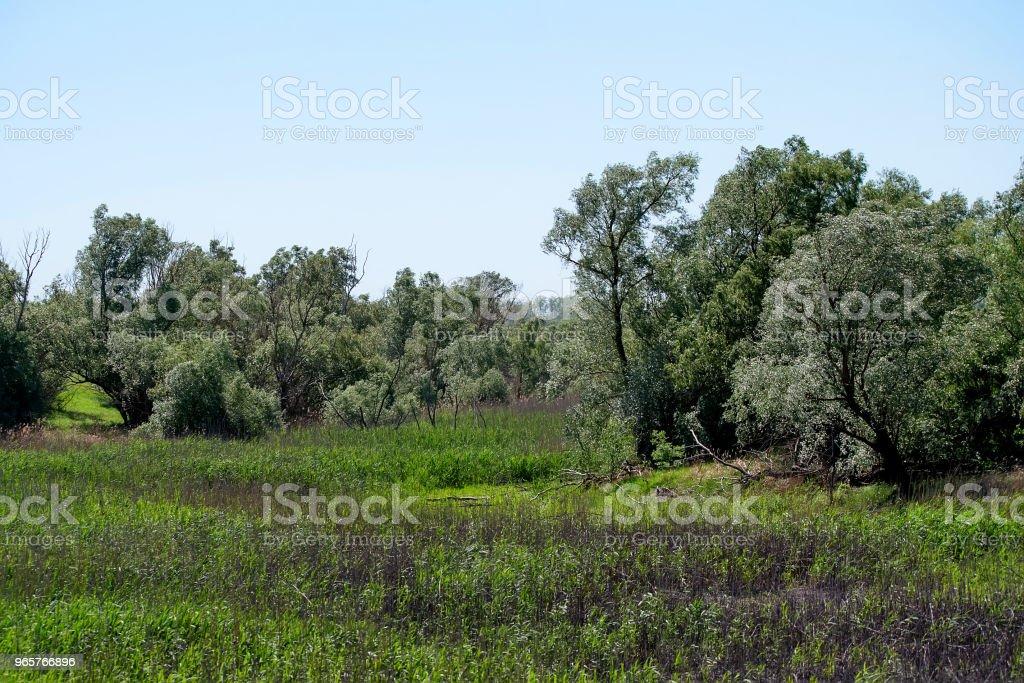 Mooie landelijke zomerse landschap met bomen - Royalty-free Blad Stockfoto
