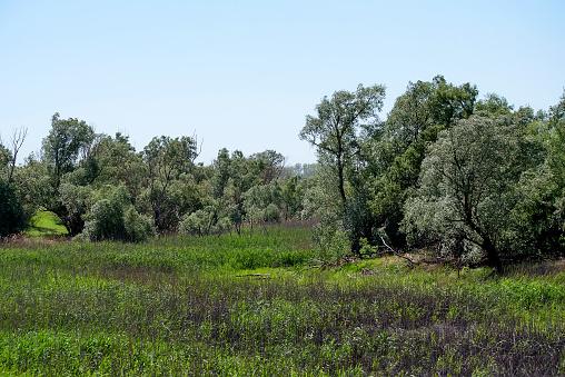 Mooie Landelijke Zomerse Landschap Met Bomen Stockfoto en meer beelden van Blad