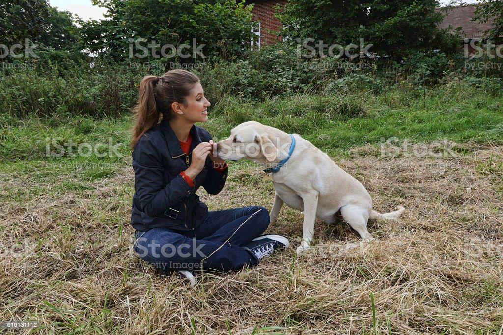 Giving treat to yellow labrador Russian outdoor girl stock photo