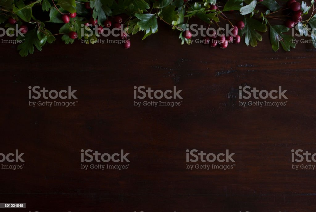beautiful rustic dark wooden background with hawthorn foliage border on top stock photo