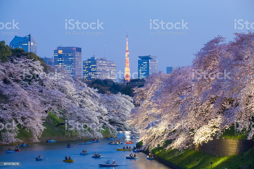 Beautiful sakura cherry blossom light up and Tokyo Tower stock photo