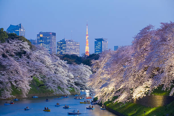 beautiful sakura cherry blossom light up and tokyo tower - tokyo japan stock photos and pictures