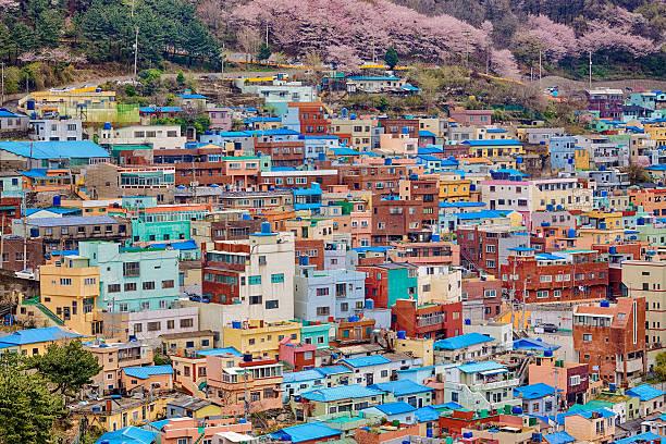 美しい桜の花にお勧めの釜山,south korea   - 釜山 ストックフォトと画像