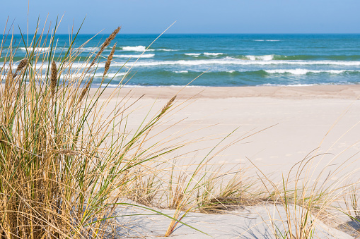 Beautiful sand beach with dry and green grass, reeds, stalks blowing in the wind