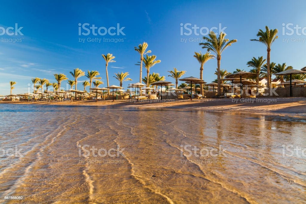 Beautiful sandy beach with palm trees at sunset. Egypt stock photo
