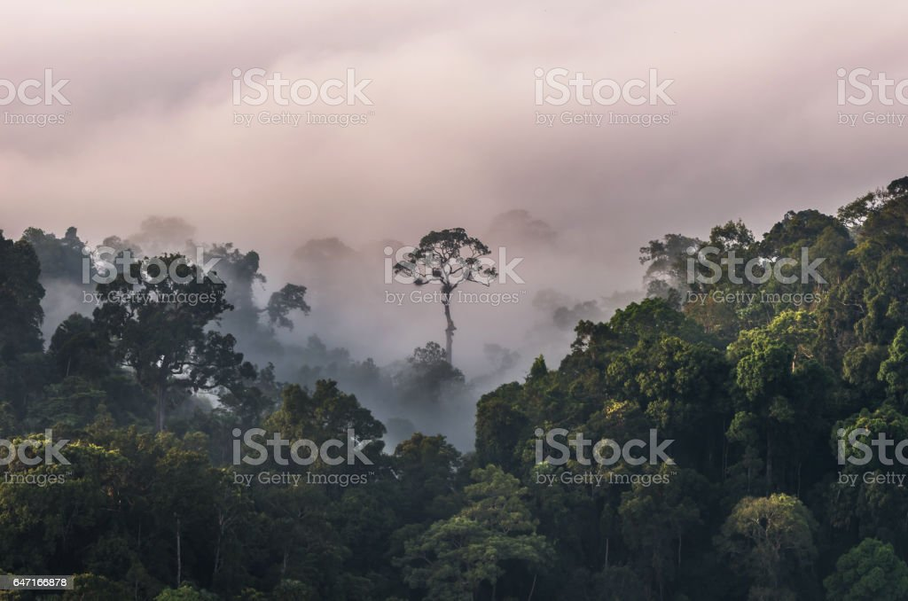beautiful scenary of mist with mountain range at PanoenThung view point in Kaeng Krachan national park,Thailand stock photo