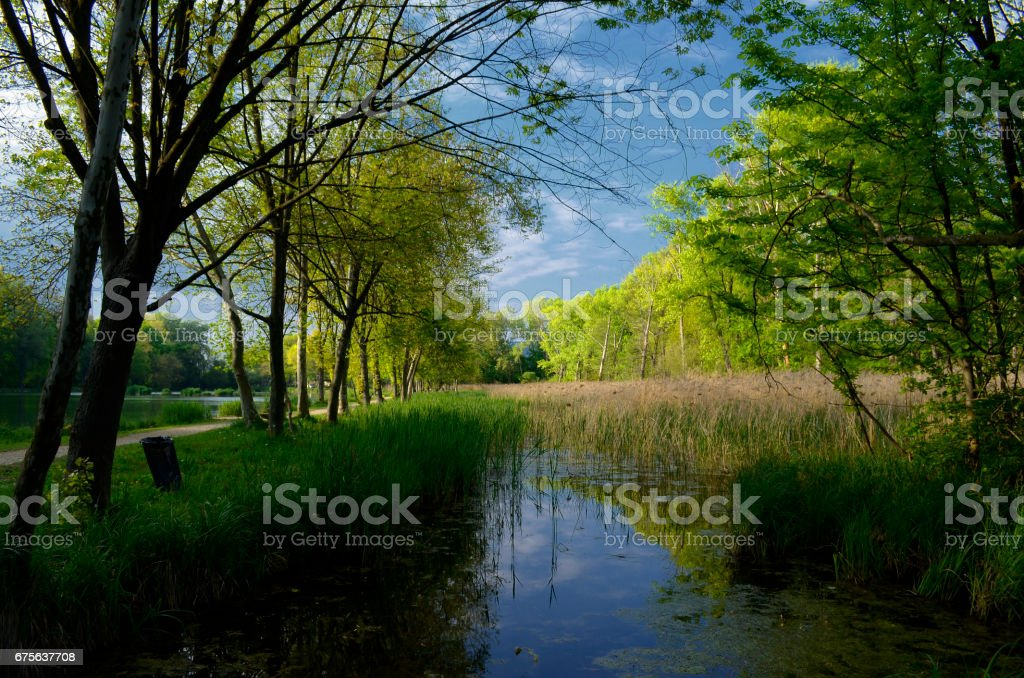 beautiful scene in the park royalty-free stock photo