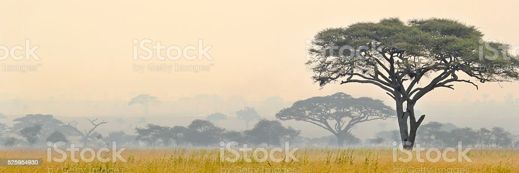 Beautiful scene of Serengeti National park stock photo