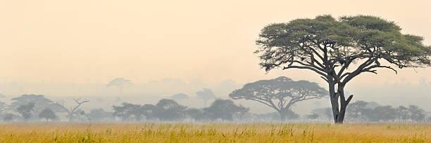Beautiful scene of Serengeti National park stock photo