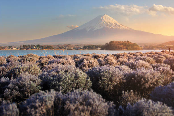 beautiful scenery during sunset of mountain fuji and flower field at kawaguchiko lake in japan this is a very popular for photographers and tourists. travel and natural concept - sapporo stock photos and pictures