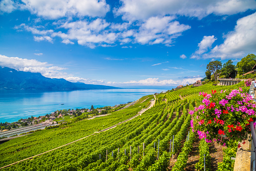 Beautiful scenery in Lavaux wine region with Lake Geneva, Switzerland