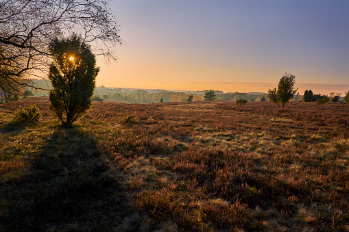 Beautiful scenery in the Luneburger Heath at sunset with trees, nature and blue sky