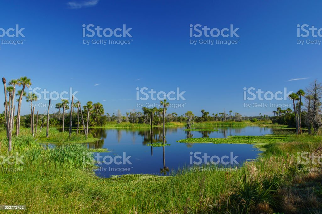 Beautiful Scenery in the Orlando Wetlands Park in Florida stock photo