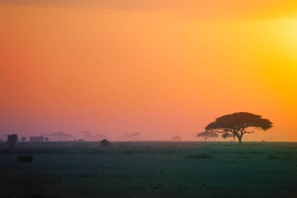 Schöne Landschaft der afrikanischen Savanne bei Sonnenuntergang – Foto
