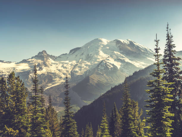 beautiful scenery of mt. rainier national park - wilderness stock pictures, royalty-free photos & images