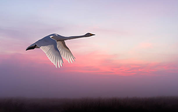 beautiful scenery of spring season - crane bird stock pictures, royalty-free photos & images