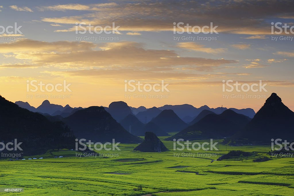 Beautiful scenery of the rapeseed field in sunrise stock photo