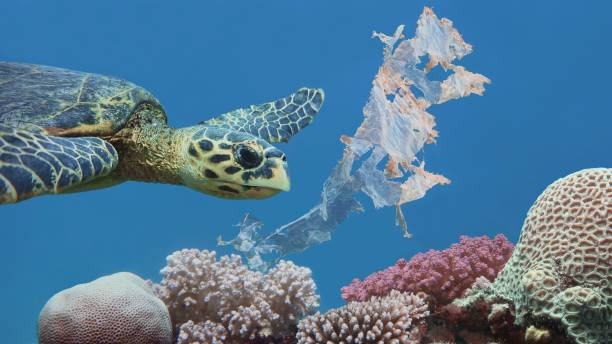 beautiful sea hawksbill turtle swiming above colorful tropical coral reef  polluted with plastic bag - major ocean stock pictures, royalty-free photos & images