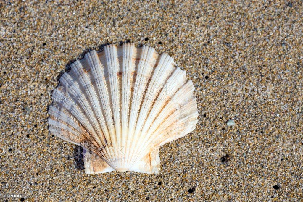 Beautiful sea shell on sand stock photo
