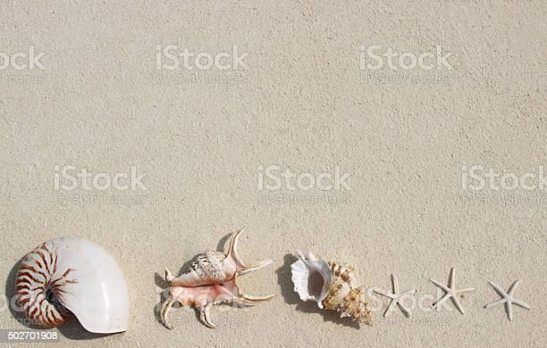 Beautiful sea shells on the beach picture id502701908?b=1&k=6&m=502701908&s=612x612&h=qqzru1oo0ulpazry2ns0mr3gyhifvrgmlkqtht8qee0=