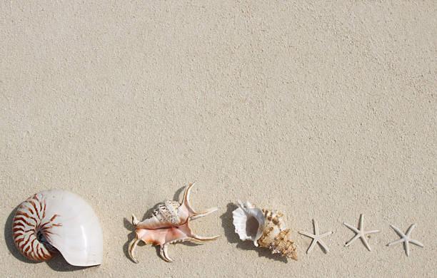 Beautiful sea shells on the beach picture id502701908?b=1&k=6&m=502701908&s=612x612&w=0&h=8eb d7d t4wossje7i3k6pd8tpmkrlxks6hbllsdedw=