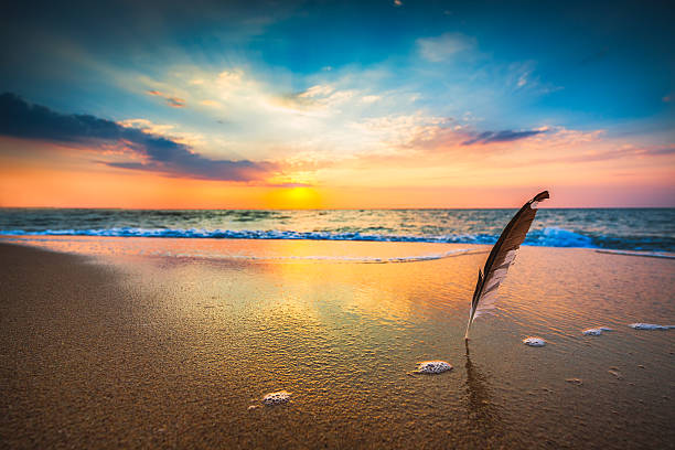 beautiful sea sunrise and gull feather stuck into the sand - hdri landscape stockfoto's en -beelden