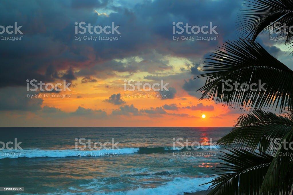 vackra havet solnedgång och palm blad - Royaltyfri Bildbakgrund Bildbanksbilder