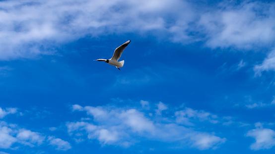 Beautiful seagull.