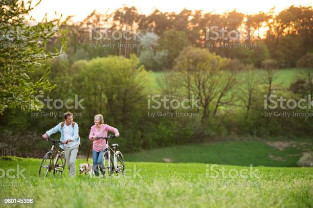 Beautiful senior couple with bicycles and dog outside in spring picture id960145396?b=1&k=6&m=960145396&s=612x612&h=ol4c436xdj8jhjsi4phnququcrxx8typglhv7oqpjgw=