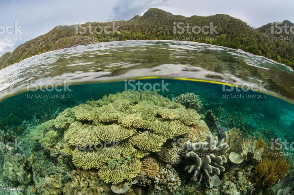 Hermoso, poco profundo arrecife de Coral - foto de stock