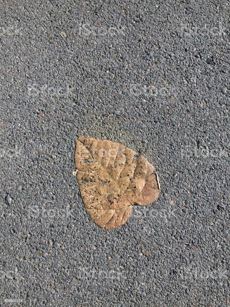 Beautiful shape of dried bo leaf stock photo