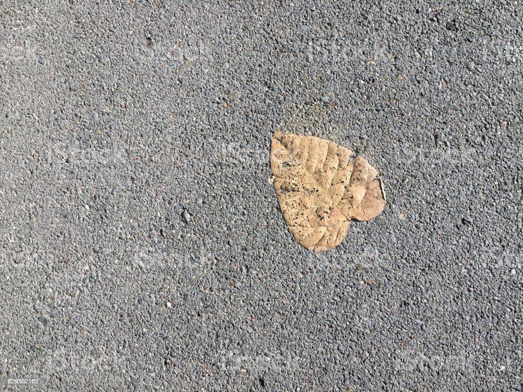 Beautiful shape of dried bo leaf. stock photo