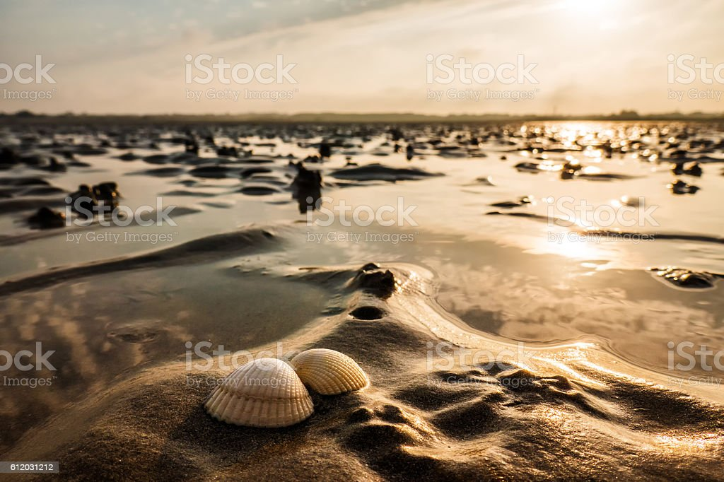 Beautiful shells on sand during low tide stock photo