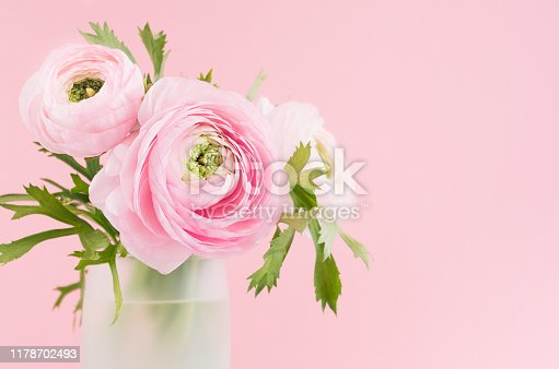 Beautiful shine soft light buttercup flowers head in delicate vase closeup, details on gentle pink background.