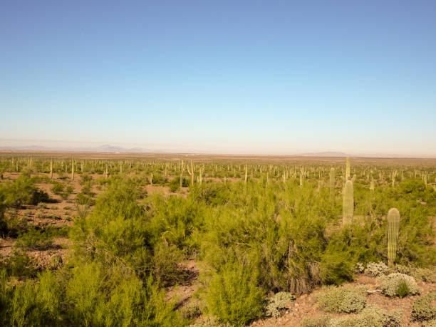 Beautiful shot of an Arizona desert stock photo