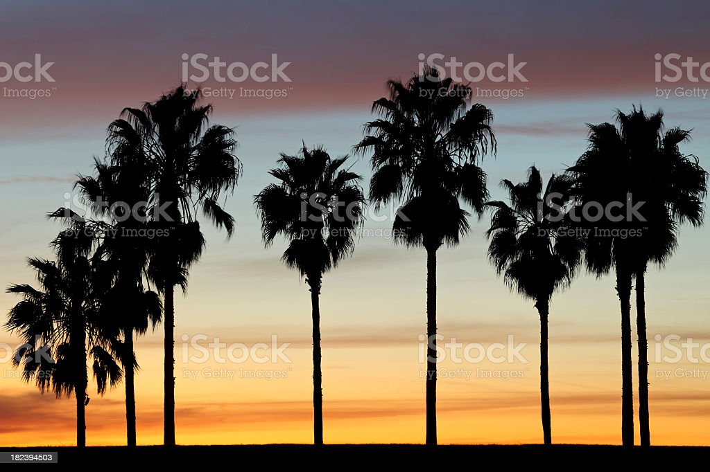 Beautiful silhouette of palm trees at sunset royalty-free stock photo