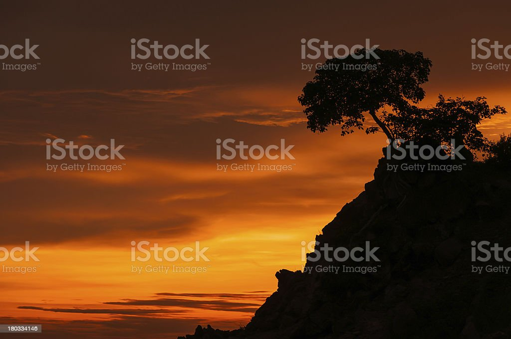 Beautiful silhouette tree royalty-free stock photo
