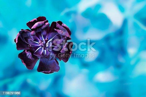 Purple flower. Freshness spring or summer morning backdrop. Blue nature bokeh template.