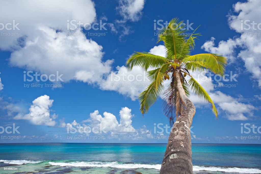 beautiful single palm tree and turquoise ocean royalty-free stock photo