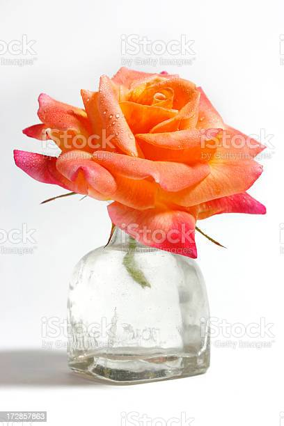 Beautiful single rose in small glass vase picture id172857863?b=1&k=6&m=172857863&s=612x612&h=bhsc2kjmkhfh0k ntezrkdup6yvhm7ccyefvye3byqm=