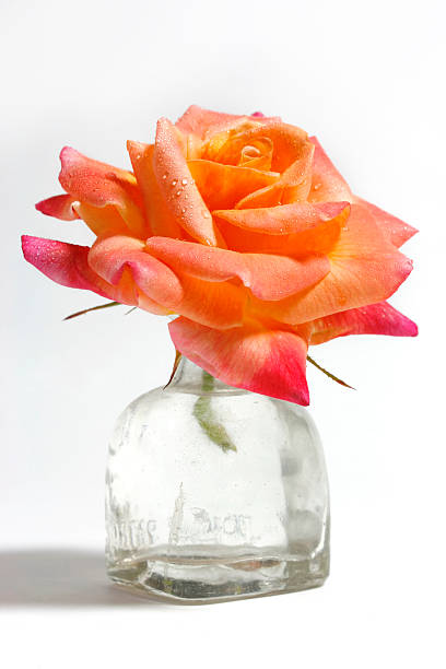Beautiful single rose in small glass vase picture id172857863?b=1&k=6&m=172857863&s=612x612&w=0&h=oo0y16 zexyri0anvcjca3yagyxhs ialmnoe0o 9c0=