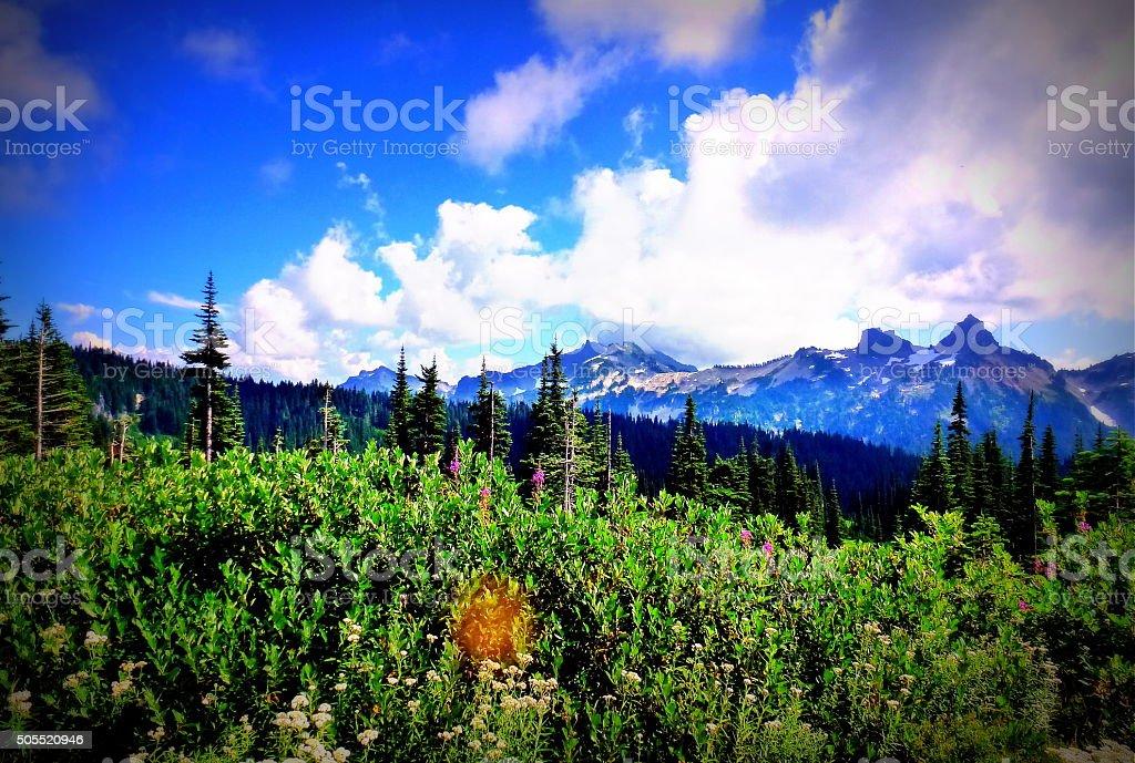 Beautiful sky and wild flowers stock photo