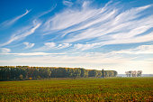 beautiful sky, field and forest in far in autumn season, bright sunlight and cirrus clouds