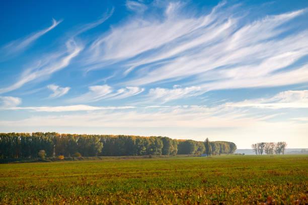 hermoso cielo, campo y bosque en ahora en temporada de otoño, luz del sol y las nubes cirrus - foto de stock