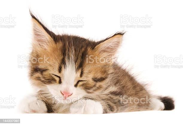 Beautiful sleeping kitty picture id144337092?b=1&k=6&m=144337092&s=612x612&h=rt2nh fp0lx gosw8ltzo5oeud jarkqcms16rfo9sq=