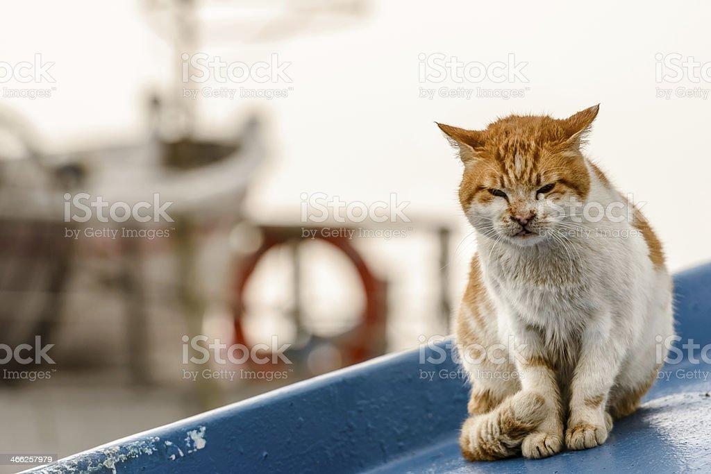 beautiful sleepy cat royalty-free stock photo
