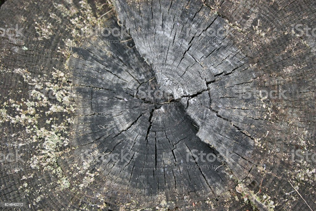 Beautiful slice of old tree trunk texture stock photo